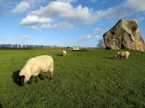 Avebury Henge and sheep
